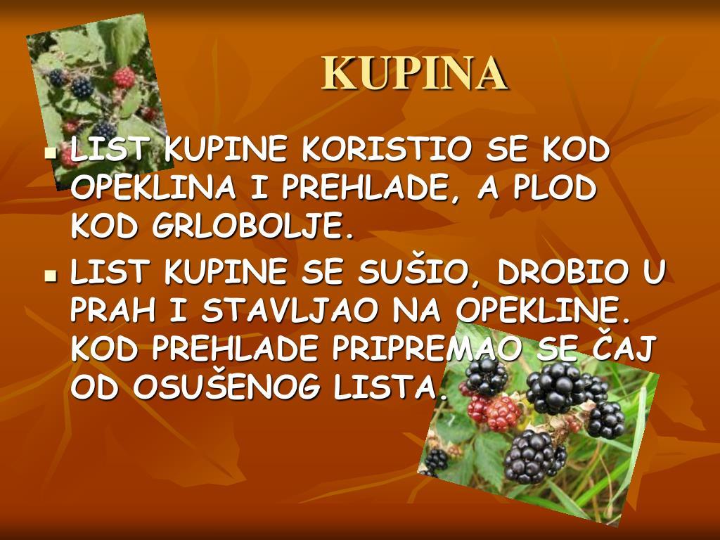 KUPINA