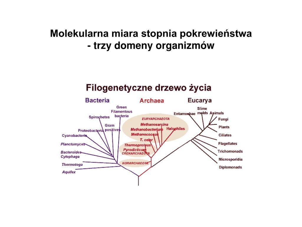 Molekularna miara stopnia pokrewieństwa