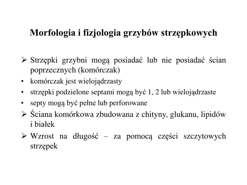 Morfologia i fizjologia grzybów strzępkowych