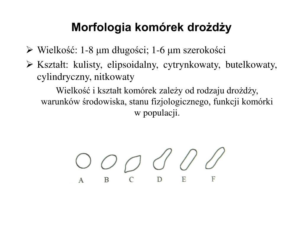 Morfologia komórek drożdży