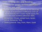 main nesting site and feeding grounds for green turtles recorded in oman sea area
