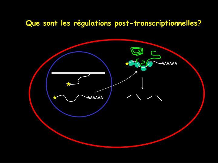 Que sont les régulations post-transcriptionnelles?