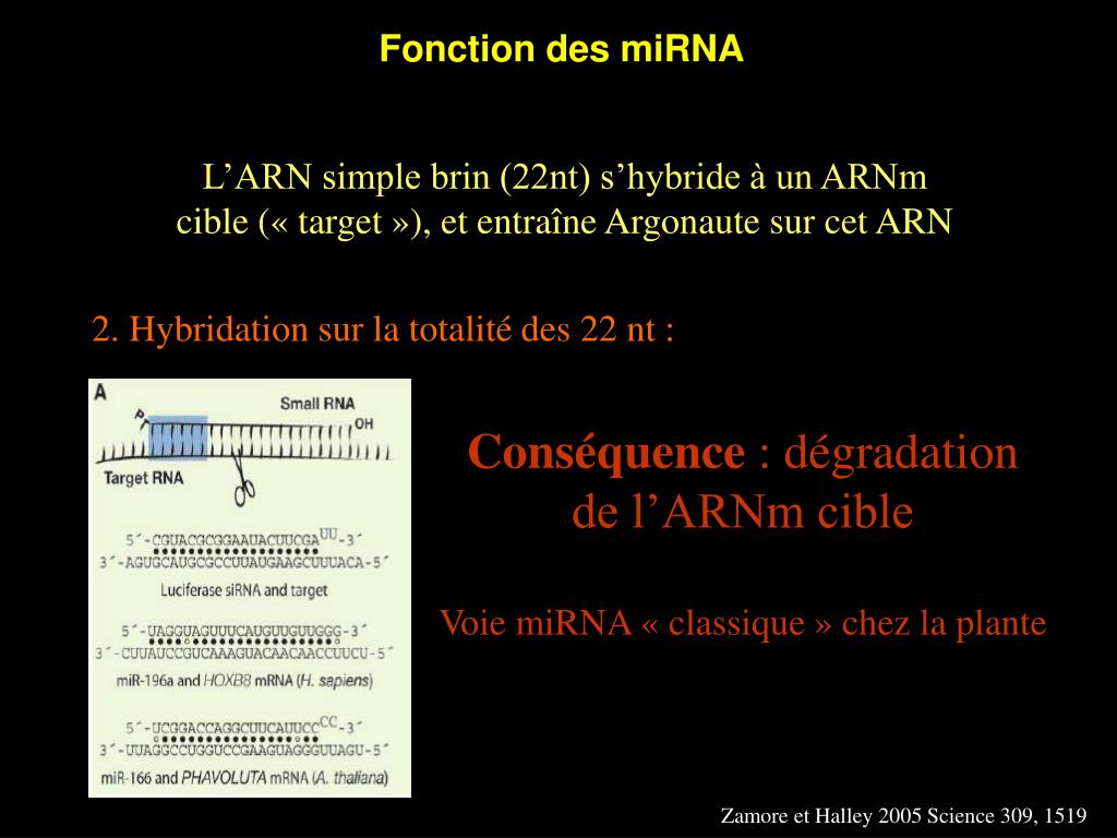Fonction des miRNA