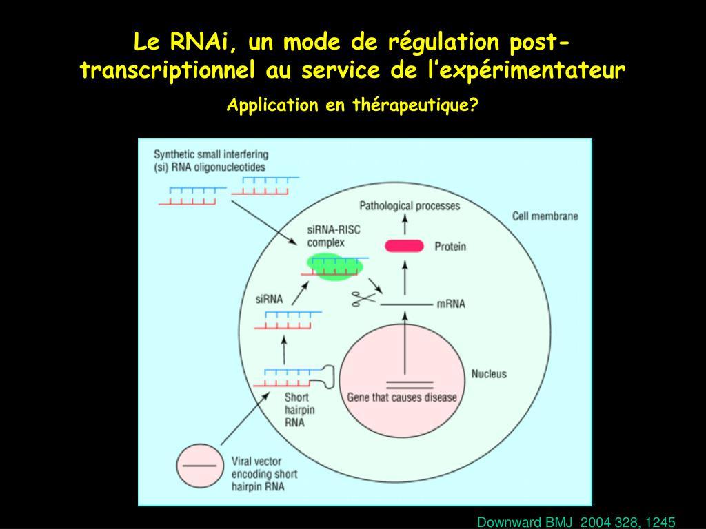 Le RNAi, un mode de régulation post-transcriptionnel au service de l'expérimentateur