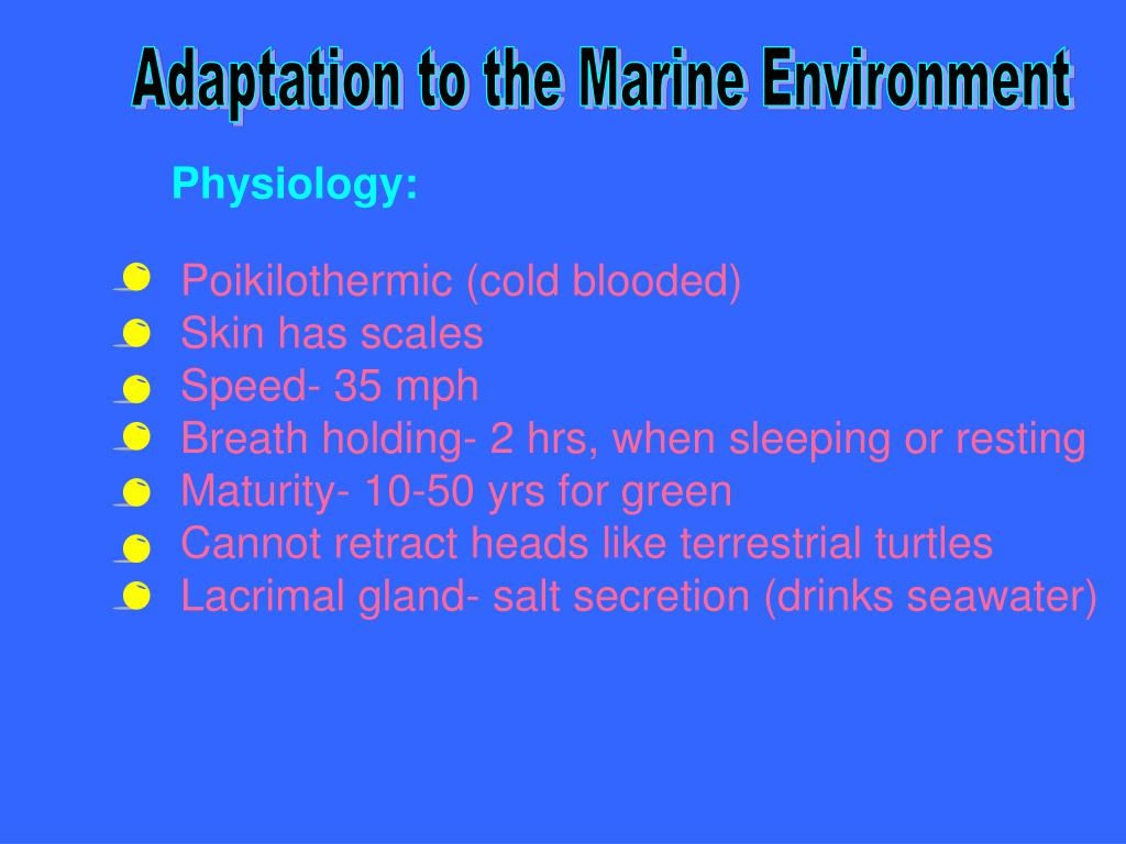 Adaptation to the Marine Environment
