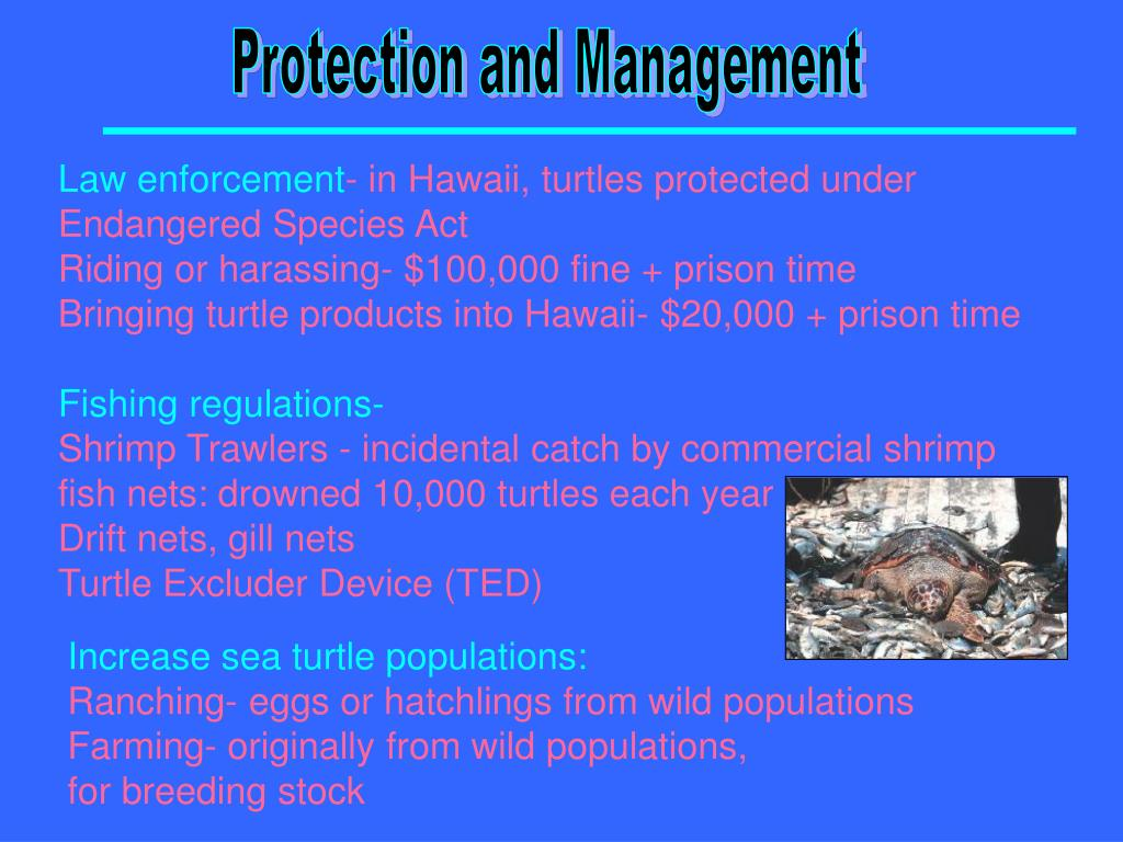 Protection and Management