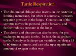 turtle respiration47