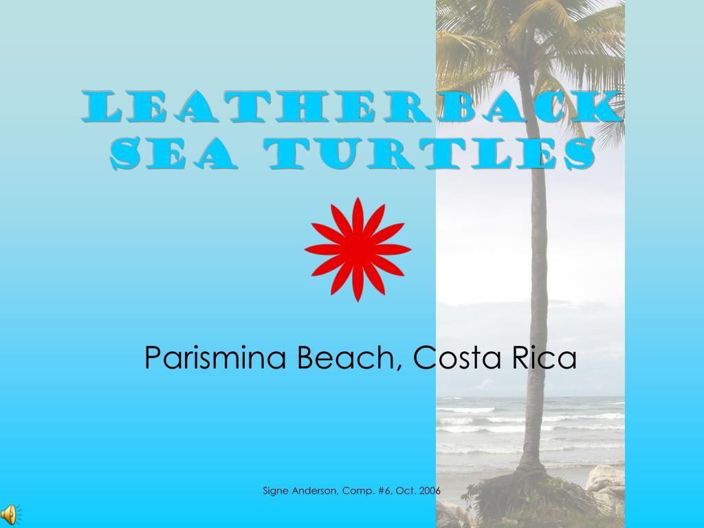 leatherback sea turtles l.