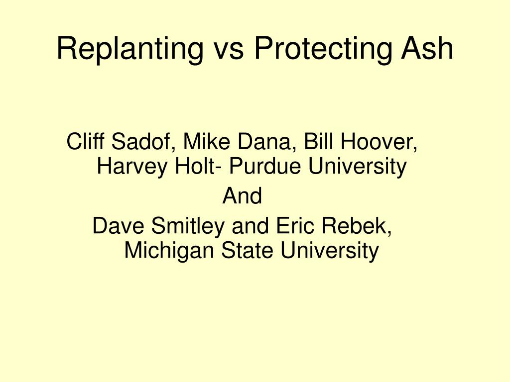replanting vs protecting ash l.