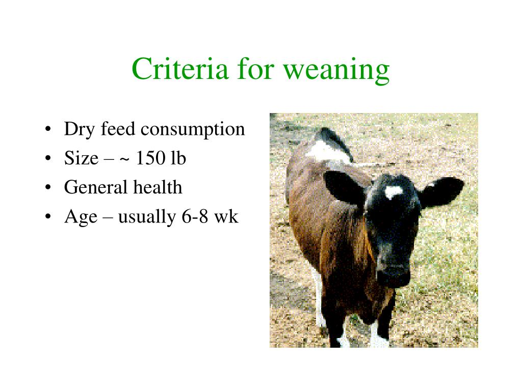 Criteria for weaning