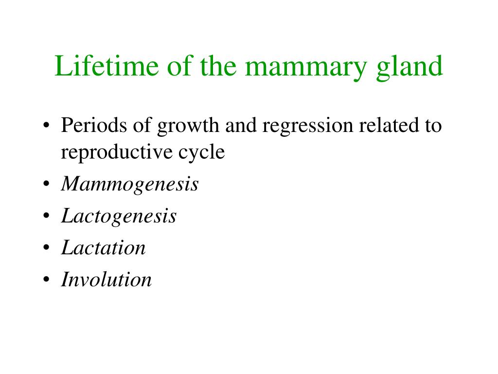 Lifetime of the mammary gland