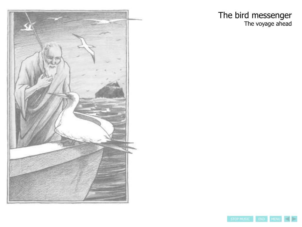 The bird messenger