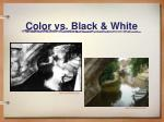 color vs black white9