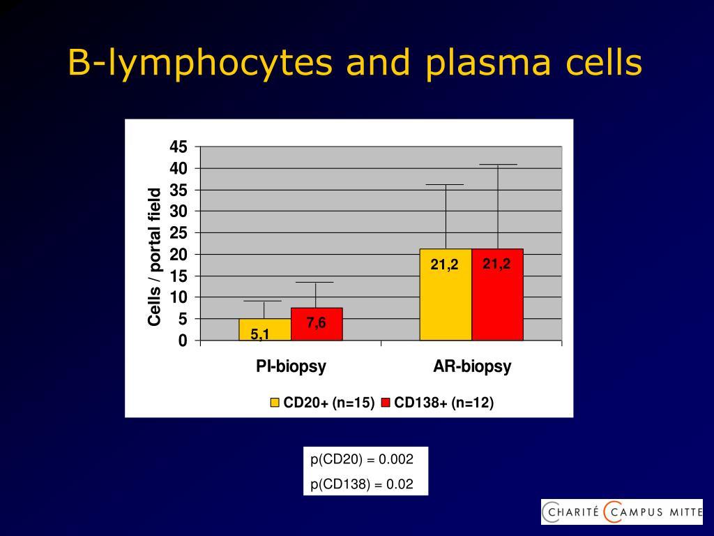 B-lymphocytes and plasma cells