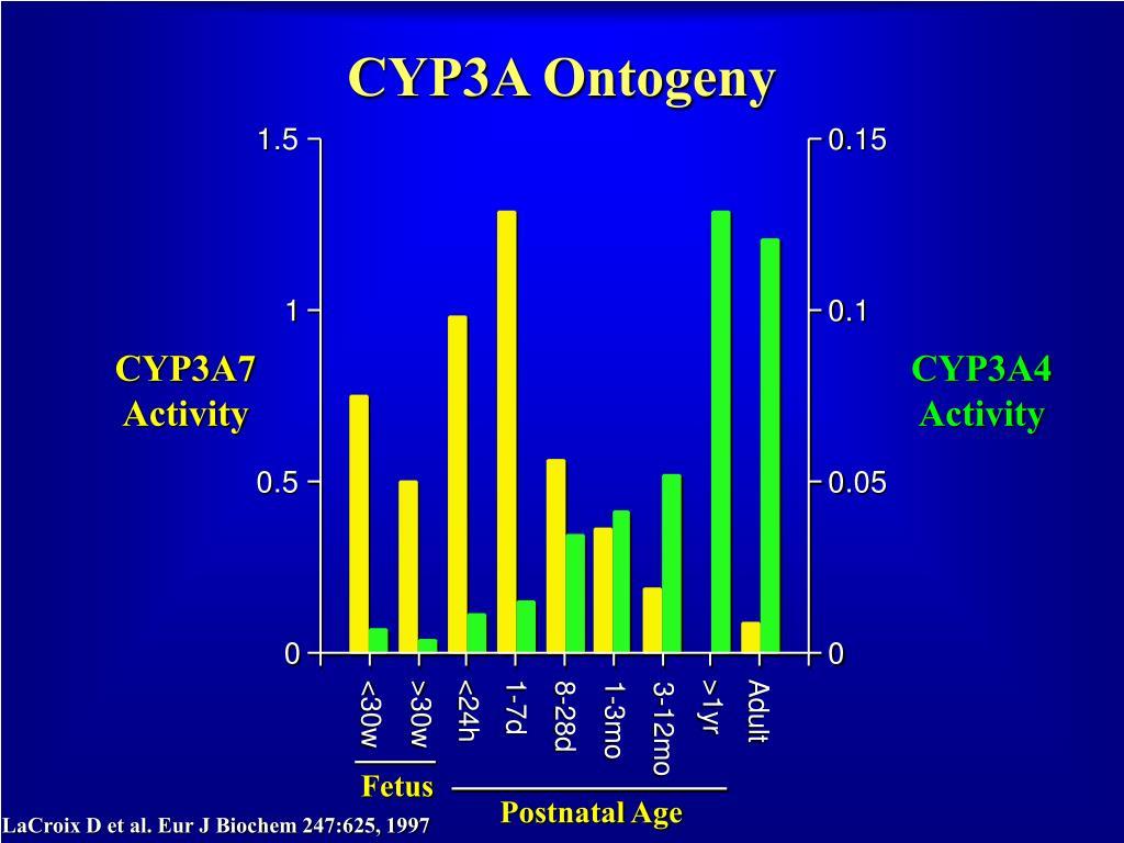CYP3A Ontogeny