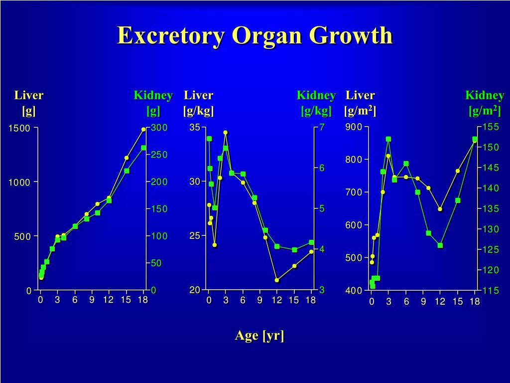 Excretory Organ Growth