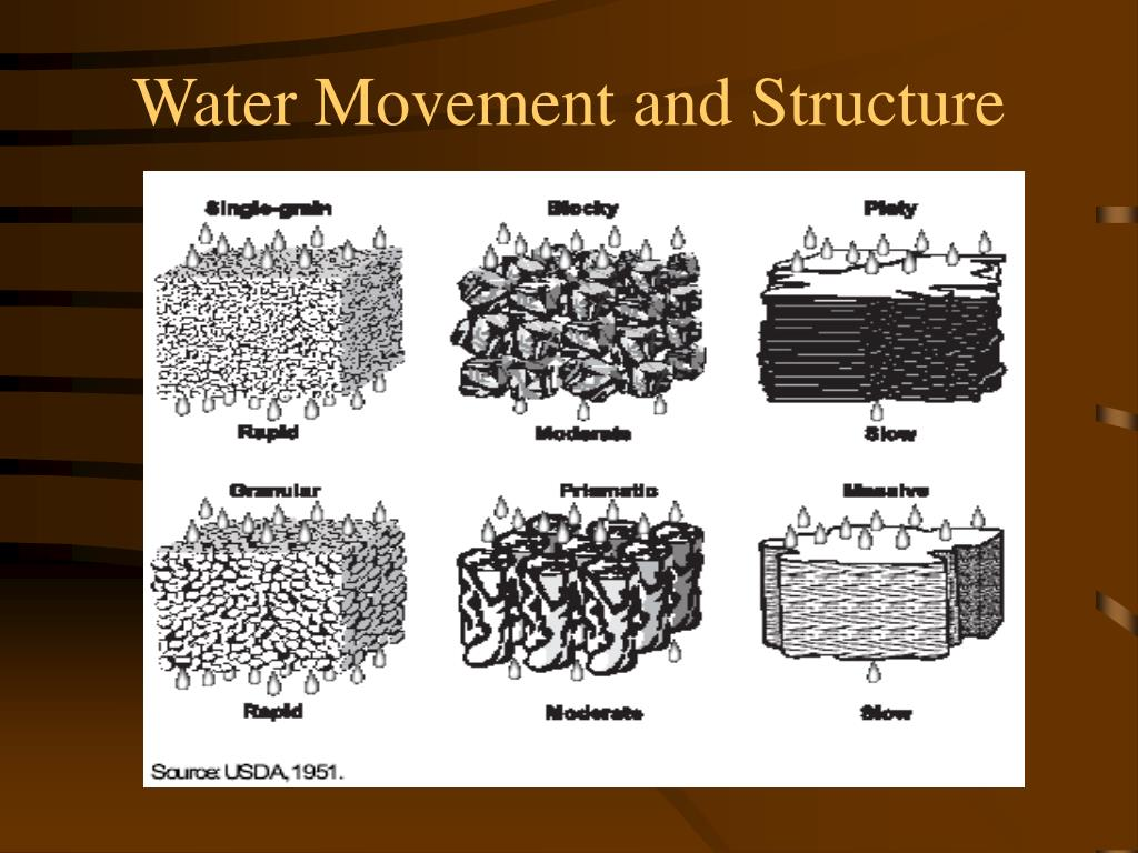 Water Movement and Structure