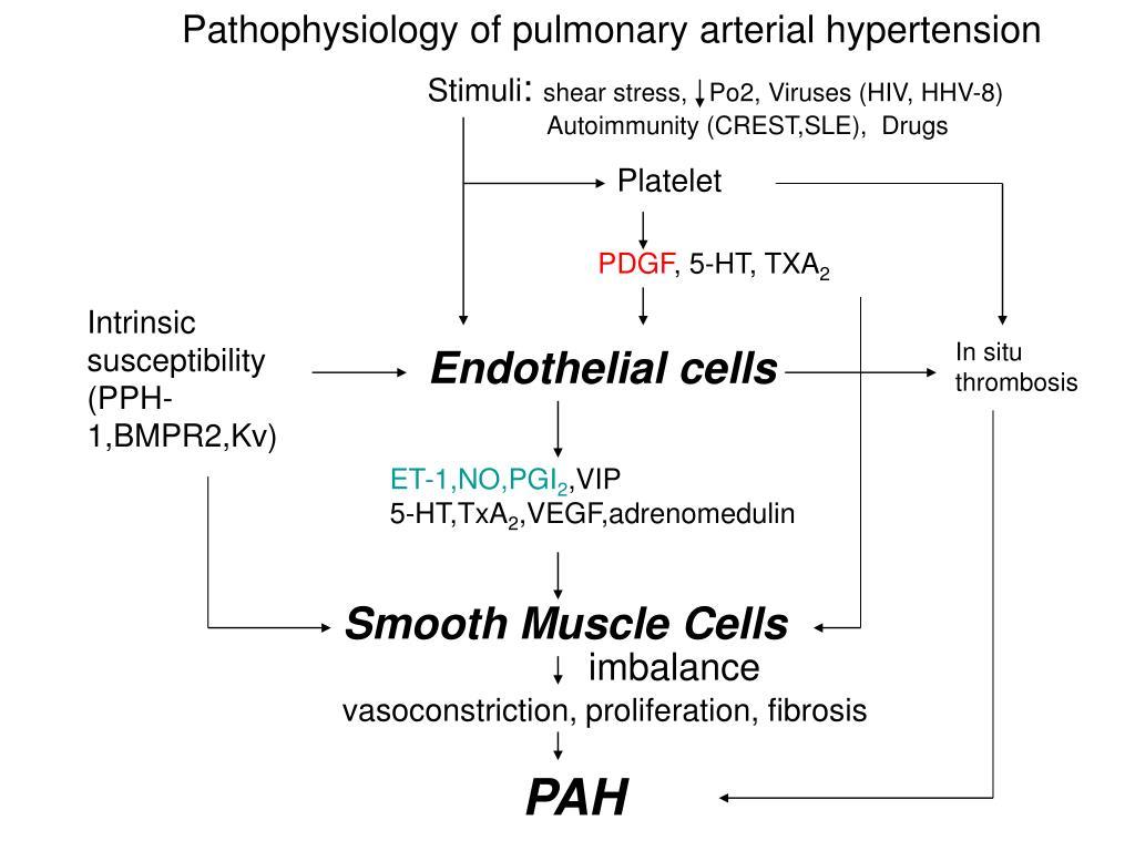 Pathophysiology of pulmonary arterial hypertension