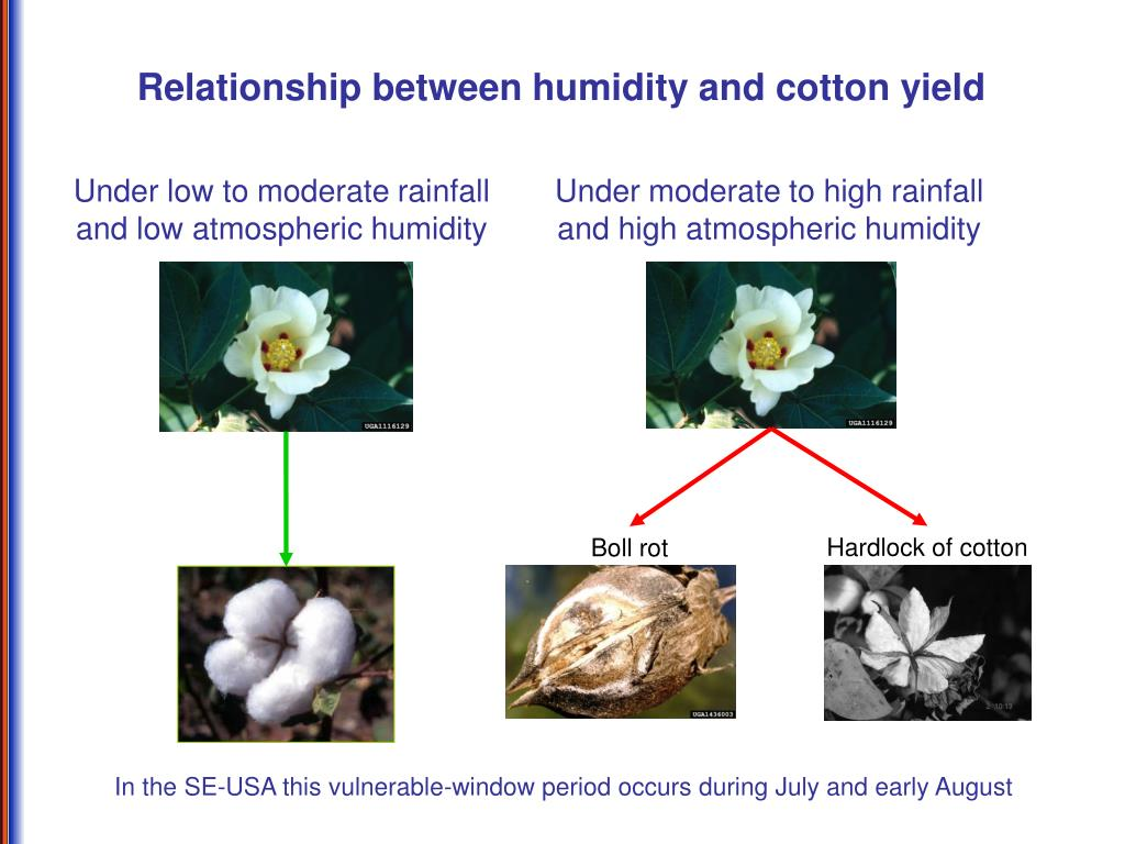 Relationship between humidity and cotton yield