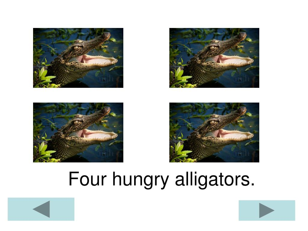 Four hungry alligators.