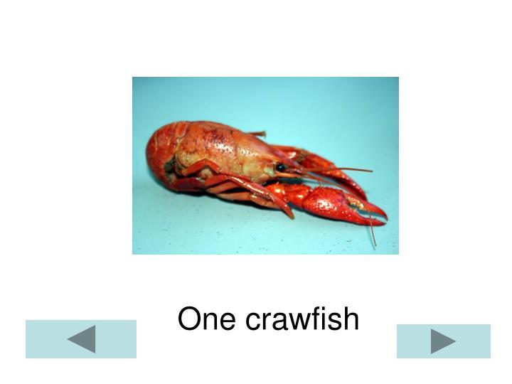 One crawfish