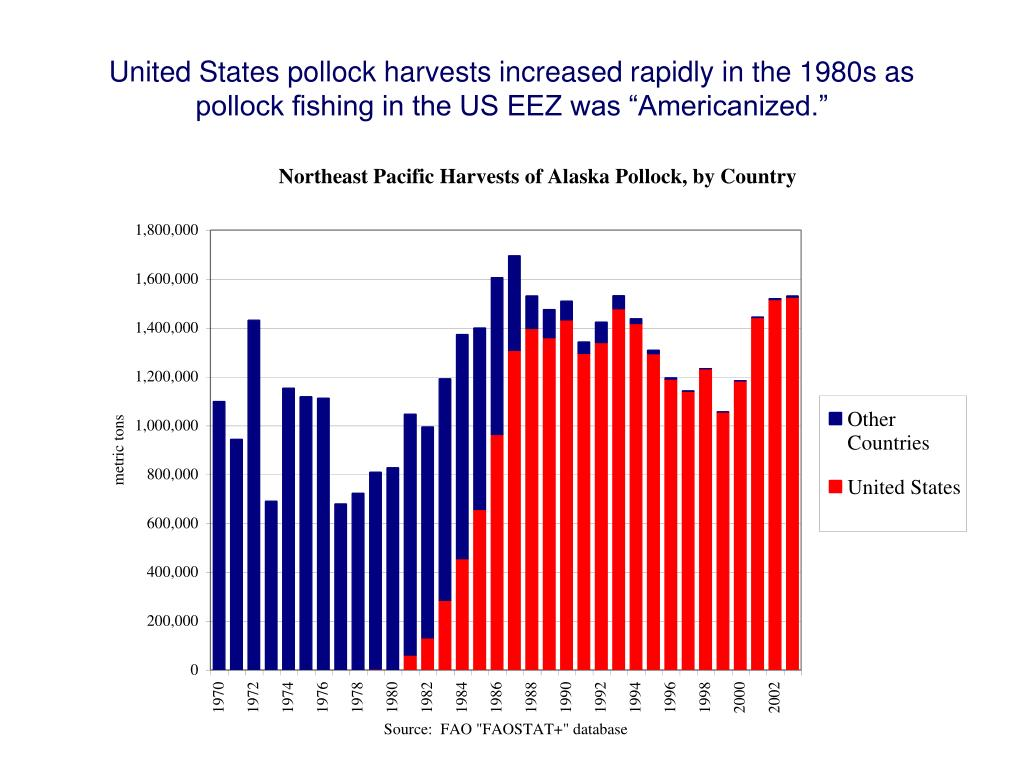"""United States pollock harvests increased rapidly in the 1980s as pollock fishing in the US EEZ was """"Americanized."""""""