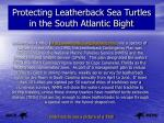 protecting leatherback sea turtles in the south atlantic bight
