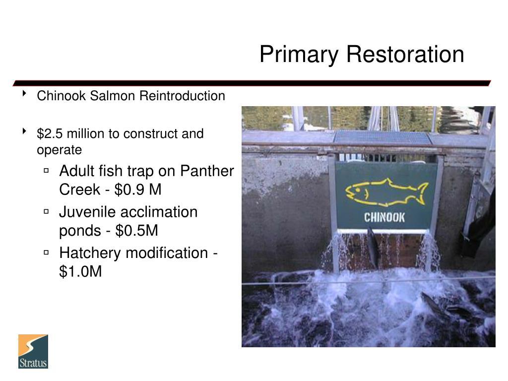 Primary Restoration