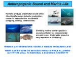 anthropogenic sound and marine life