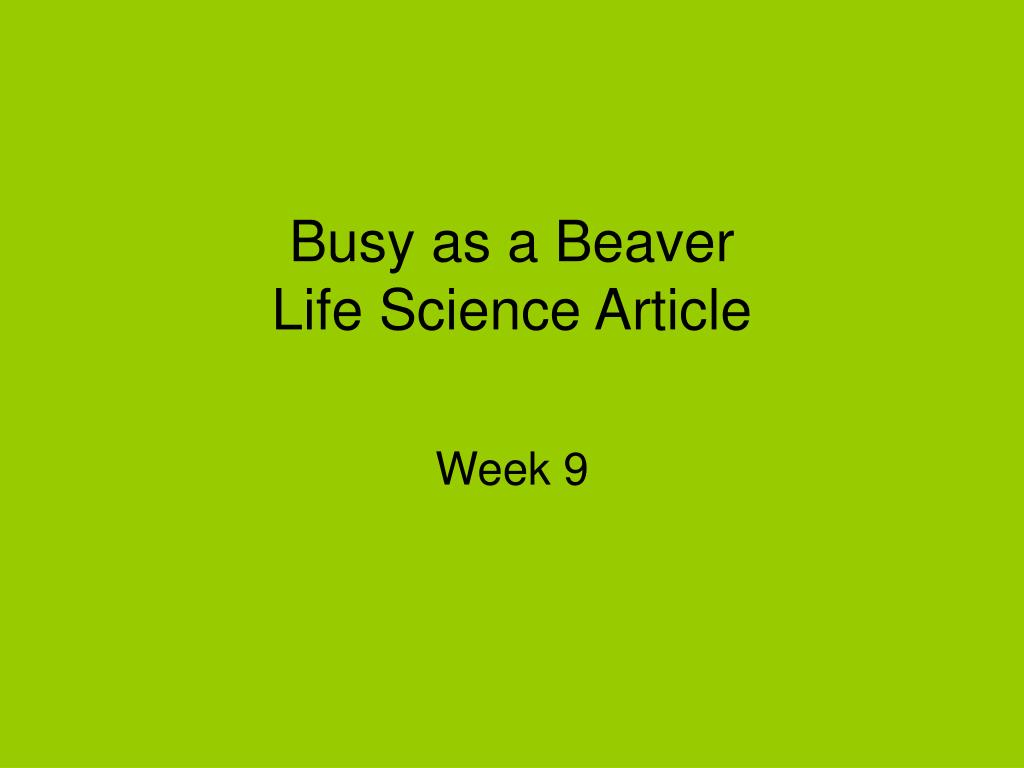 busy as a beaver life science article l.