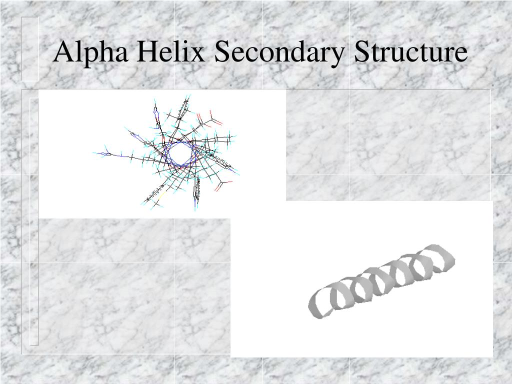 Alpha Helix Secondary Structure