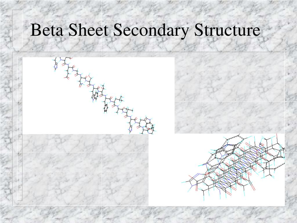Beta Sheet Secondary Structure