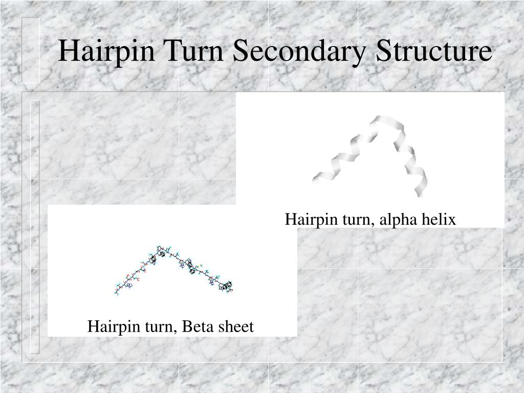 Hairpin Turn Secondary Structure