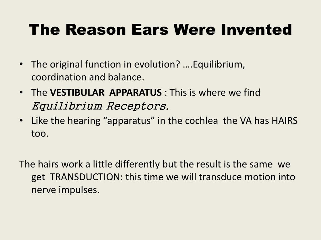 the reason ears were invented l.