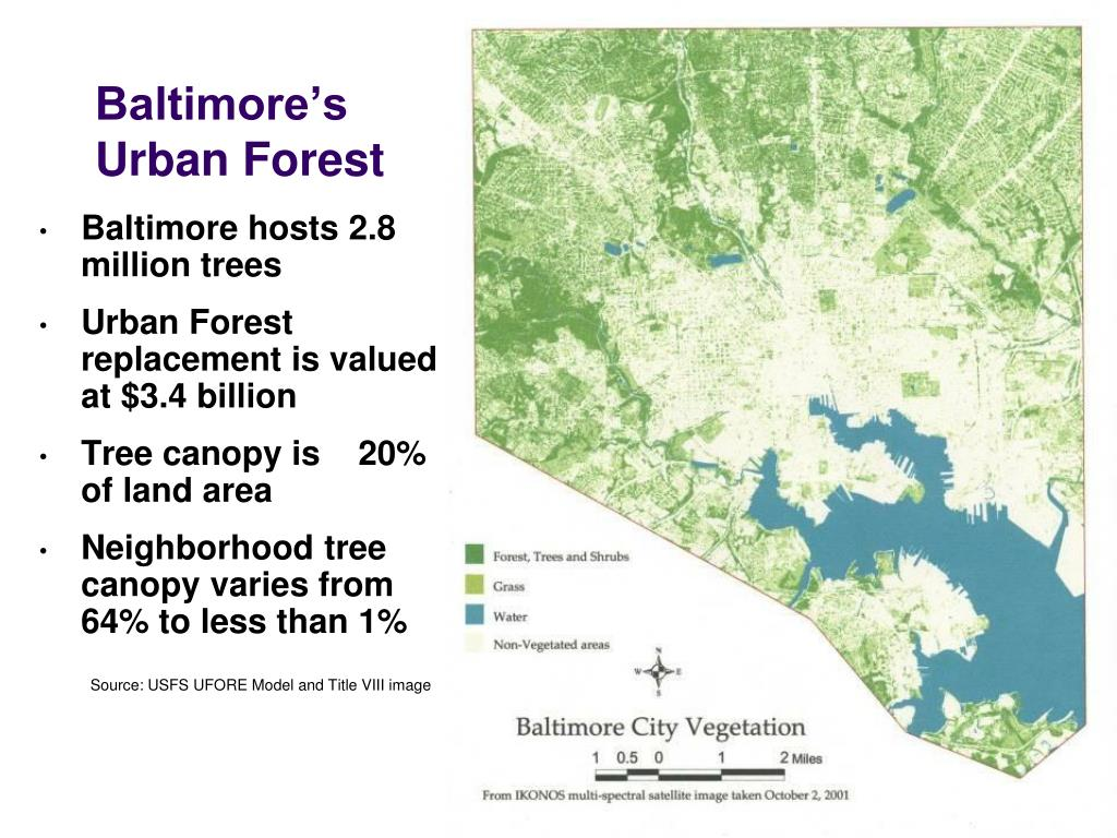 Baltimore's   Urban Forest