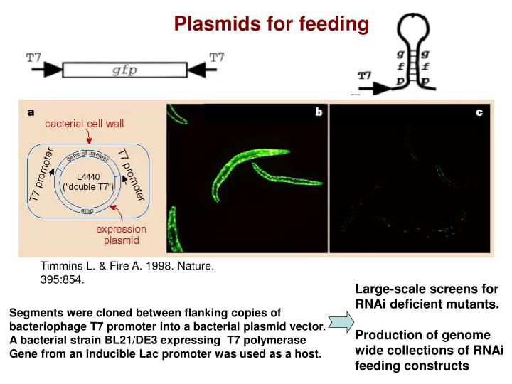 Plasmids for feeding