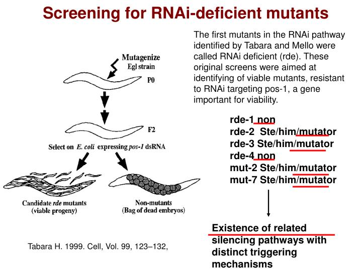 Screening for RNAi-deficient mutants