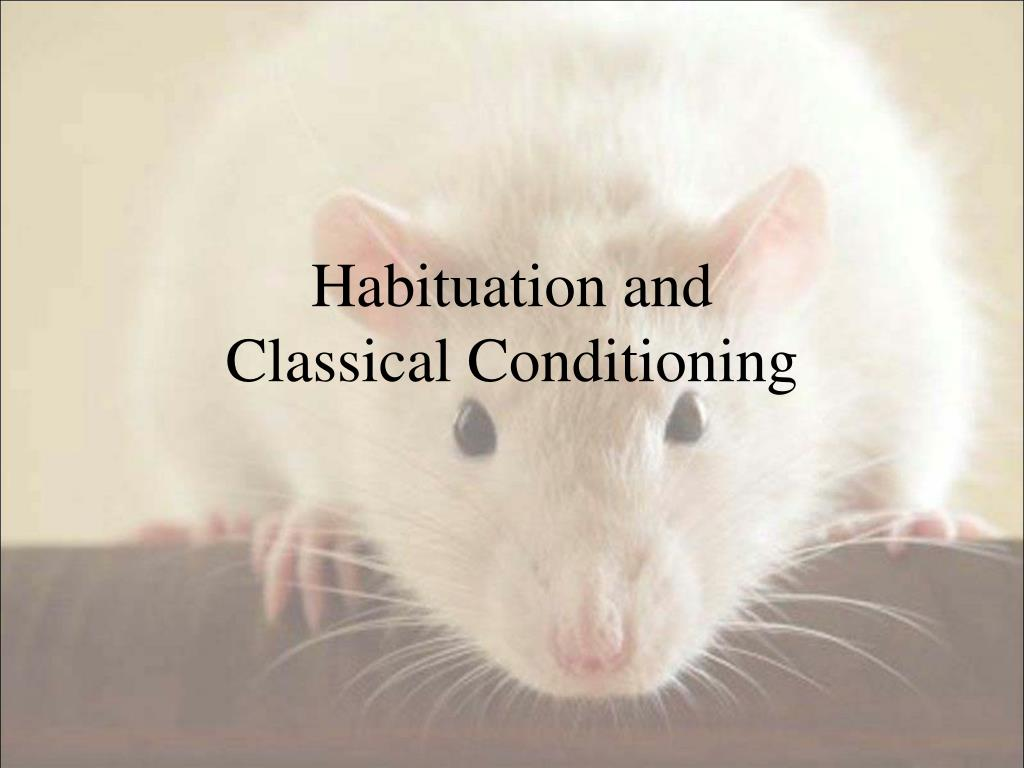 habituation and classical conditioning l.