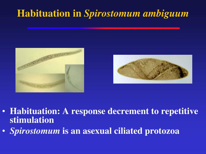 Habituation in spirostomum ambiguum