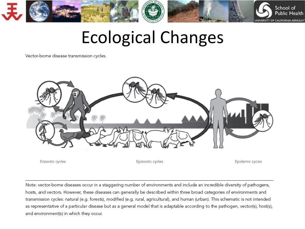 Ecological Changes