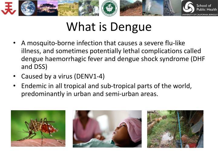 What is dengue