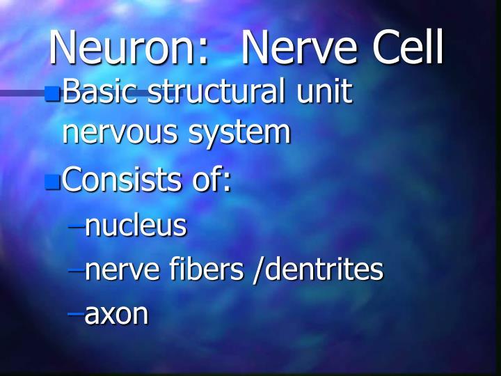 Neuron nerve cell