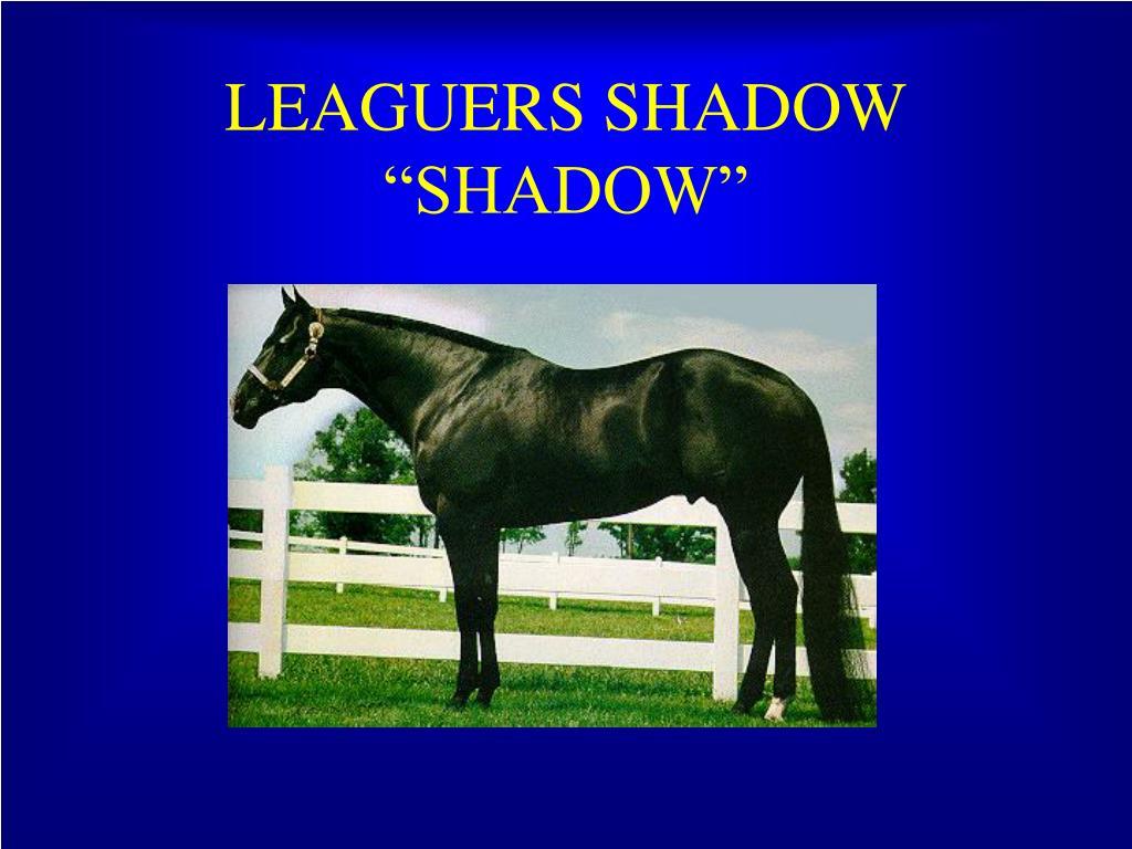 LEAGUERS SHADOW