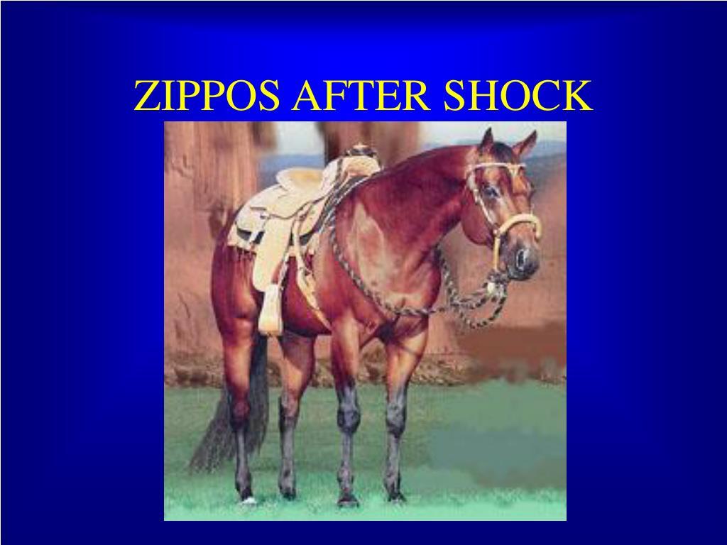 ZIPPOS AFTER SHOCK