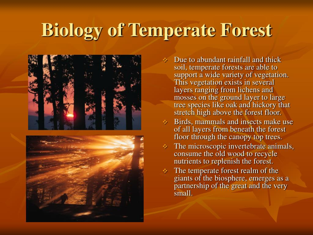 Biology of Temperate Forest