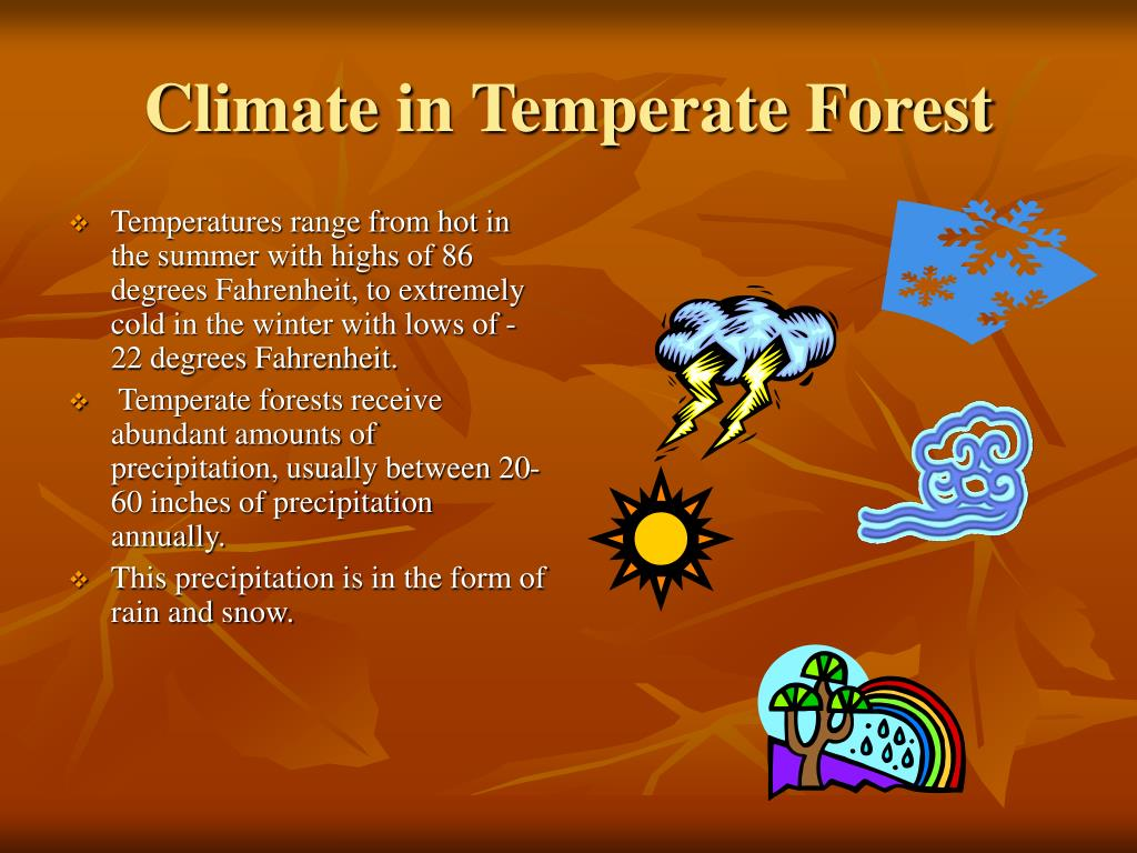 Climate in Temperate Forest