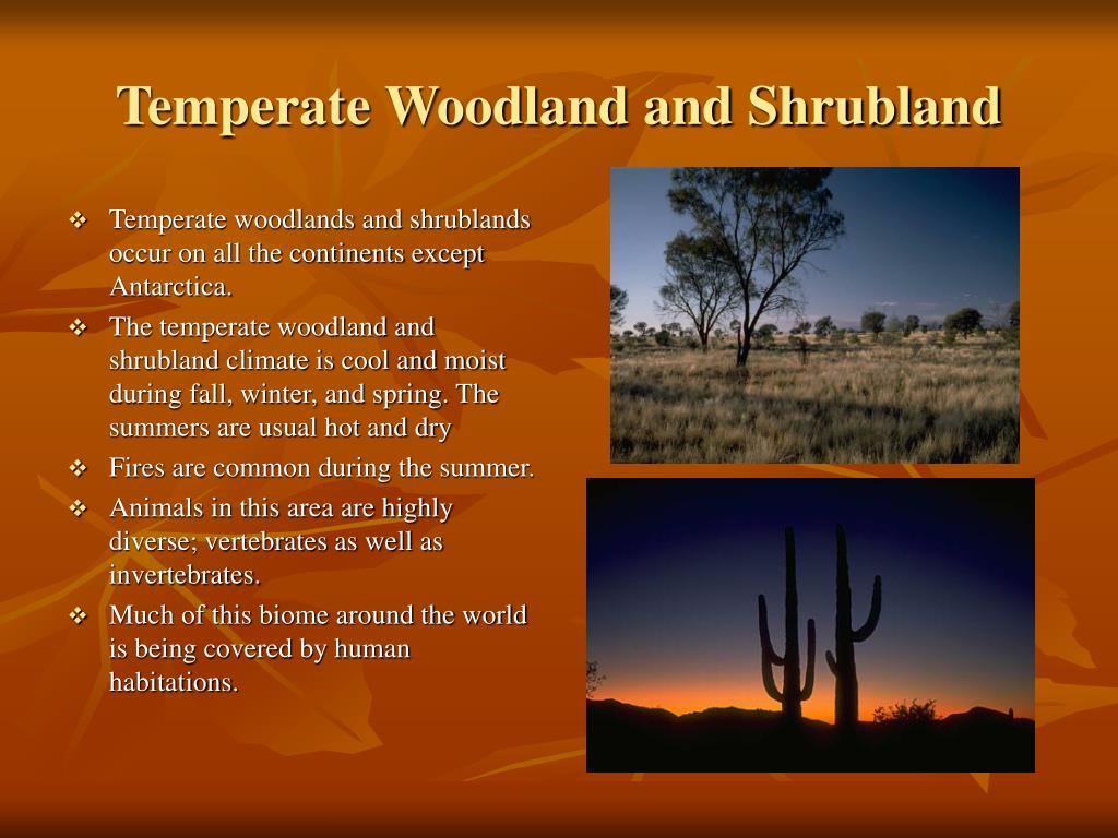 Temperate Woodland and Shrubland
