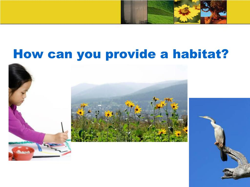 How can you provide a habitat?