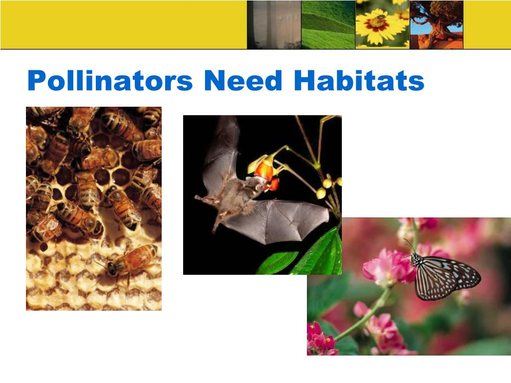 Pollinators Need Habitats