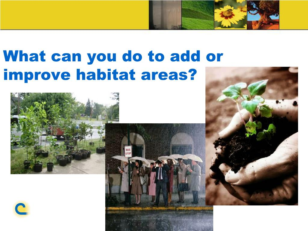 What can you do to add or improve habitat areas?